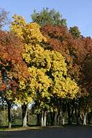 Золотая осень в Вологде