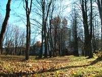аллея с листьями