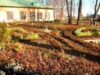 цветы на территории Алексеевского монастыря