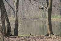 Террасный пруд в заброшенном парке