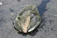 Улов рыбаков