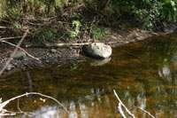 Ручей, камень