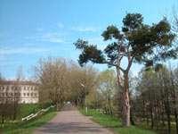 Дорога к беседке Островского
