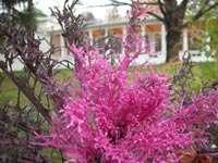 Цветок неизвестного названия