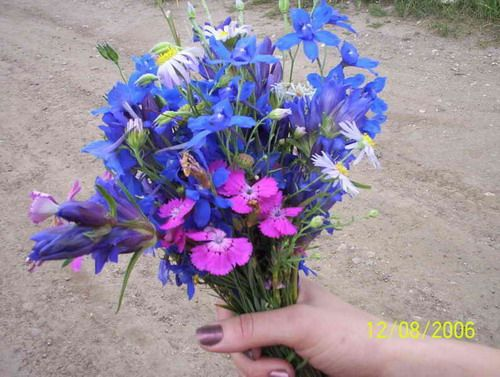 Букет горных цветов