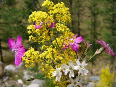 Флора долины Джазатора