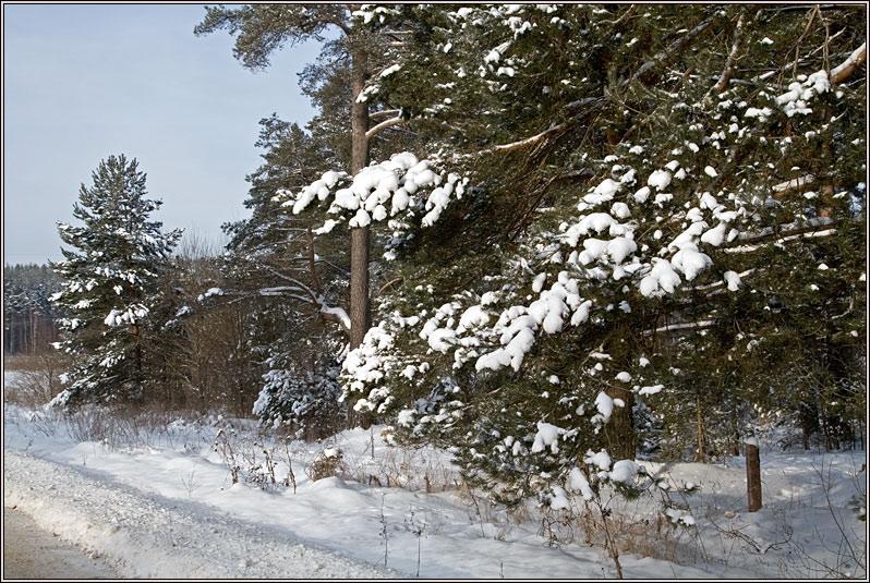 http://strusto.fotoplenka.users.photofile.ru/photo/strusto.fotoplenka/150315288/158137589.jpg
