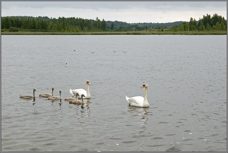 http://strusto.fotoplenka.users.photofile.ru/photo/strusto.fotoplenka/150103995/153260543.jpg