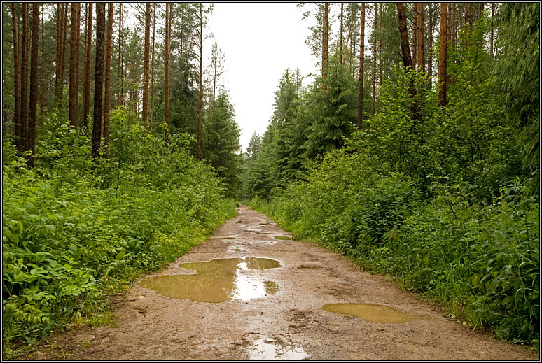 http://strusto.fotoplenka.users.photofile.ru/photo/strusto.fotoplenka/150109498/153512716.jpg