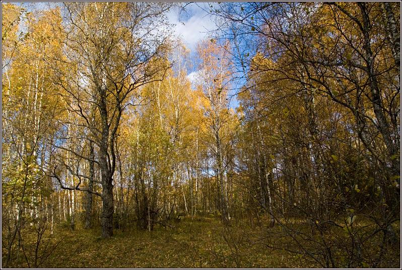 http://strusto.fotoplenka.users.photofile.ru/photo/strusto.fotoplenka/150648696/163750311.jpg