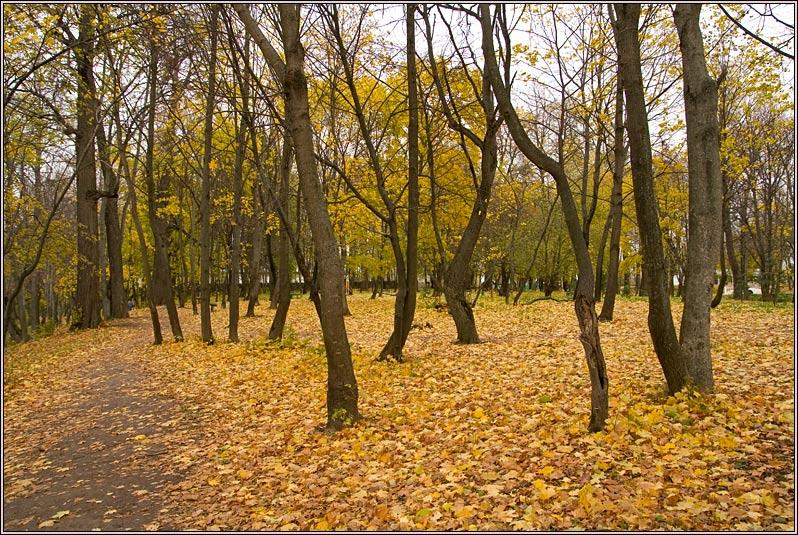 http://strusto.fotoplenka.users.photofile.ru/photo/strusto.fotoplenka/150648696/163769852.jpg