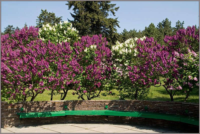 http://strusto.fotoplenka.users.photofile.ru/photo/strusto.fotoplenka/151076710/169845549.jpg