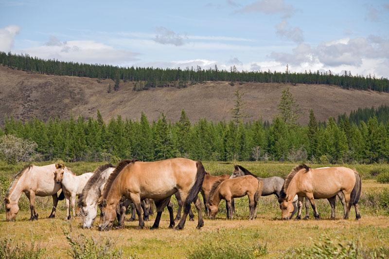 Якутия, Оймяконский улус, лошади, фотоэкспедиция, Сергей Карпухин